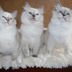 Three kittens in a row with their paws in the air.