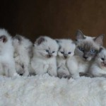 Litter of kittens in a row with queen