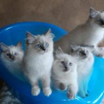 Kittens piled into a basket