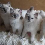 Line of kittens