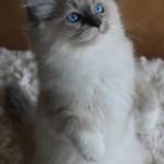 Kitten standing on back legs from above