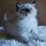 Kitten sitting on fuzzy white
